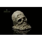 Głowy i czaszki (21)